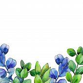 Green Boxwood Leaf. Leaf Plant Botanical Garden Floral Foliage. Aquarelle Leaf For Background, Textu poster
