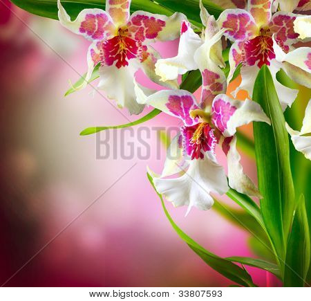 Orchid Flower Border Design