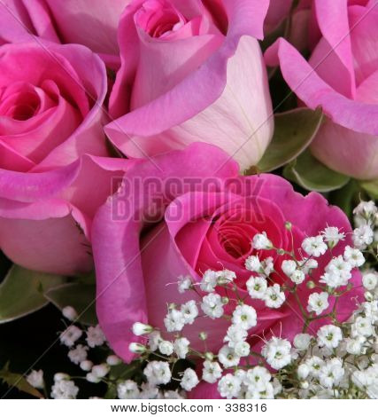 Pink Roses Baby Breath