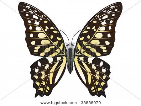 Tailed Jay  (Graphium Agamemnon) butterfly isolated on white