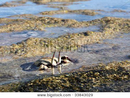 Crab Watching