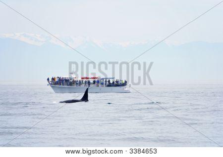 British Columbia Whale Watching
