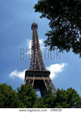 Eiffel Amongst The Trees