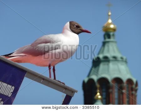 Seagull & Cathedral