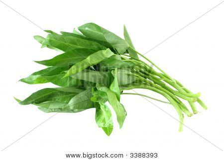Waterspinach