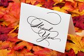 stock photo of thank you  - Thank you card on leaves with copy space - JPG