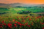 Picturesque Grain Meadows And Blooming Red Poppies At Sunset, Near Pienza, Tuscany, Italy. Spring La poster