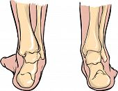 Supination of feet andPronation of feet