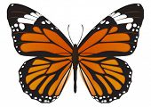 foto of flying-insect  - The Monarch butterfly  - JPG