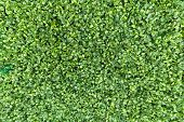 Green Leaves Carpet Background Pattern. Spring Green Foliage Young Leaves White Texture Eco Backgrou poster