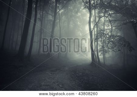 Road trough a dark spooky forest with fog