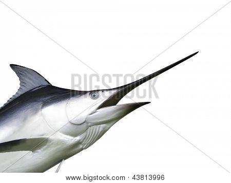 Photo of Marlin fish - Swordfish
