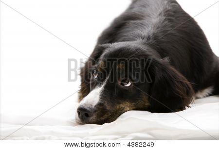 Hund hinlegen