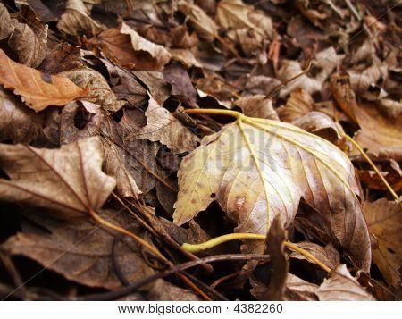 Leafes Texture