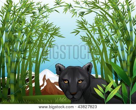 Beispiel für einen schwarzen Panther am Bambus Wald