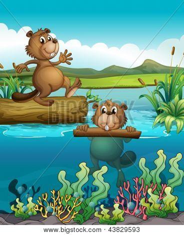 Abbildung der beiden beavers am Deep river