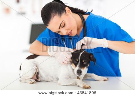 beautiful young female veterinarian examining pet dog