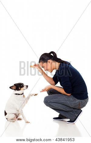 beautiful young woman training her dog