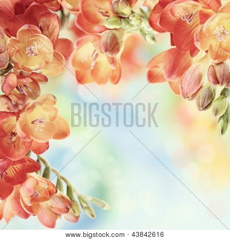Colorful fresh spring freesia flowers on green and blue bokeh background. Very shallow DOF.