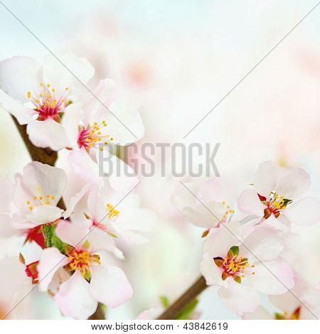 Fresh, white, soft spring tree blossoms on bokeh background. Very shallow DOF.