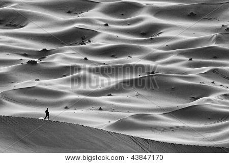Wandering in Sahara Desert, Africa