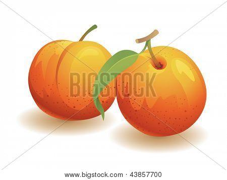 Peach, Isolated Vector Fruit