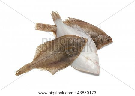 Common dab fishes on white background