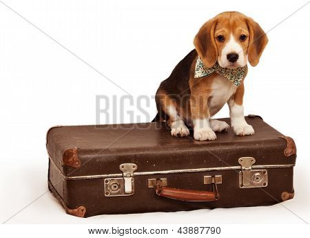 Little Puppy Sitting On The Suitcase