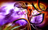 picture of fimbriae  - Digital illustration of  Uterus  in  colour  background - JPG