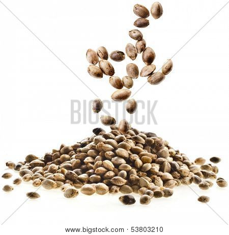 Cannabis Hemp seeds close up macro shot isolated on white background