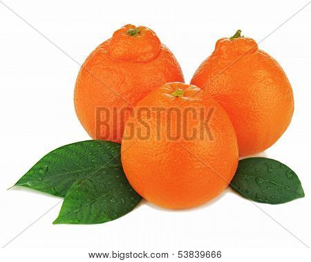 Fresh Ripe Mineola Fruits With Green Leaves Isolated On White Background.