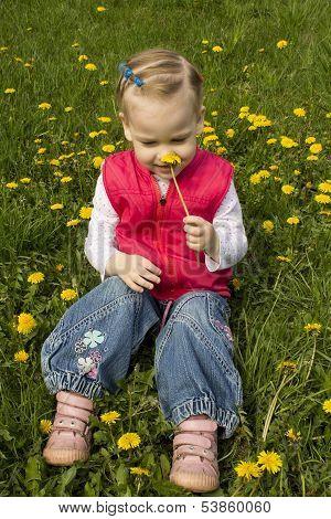 Little Girl Sniffing Dandelion.