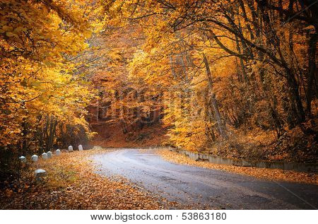 Autumn road. Composition of nature.