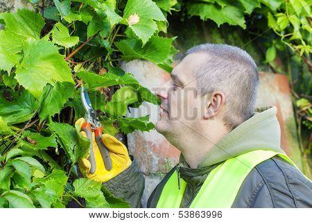 Man with gardener shears near plants