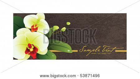 Orchid border on the wall of lime 08