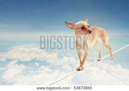 Image of little dog balancing on rope