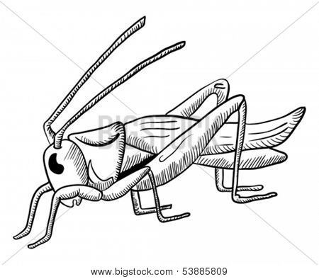 hand drawn illustration of grasshopper isolated on white