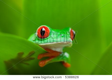 Frog In A Plant
