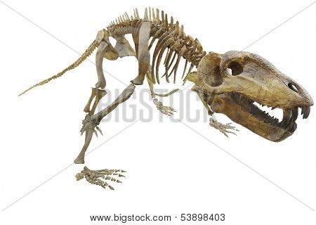 The image of dinosaur's skeleton