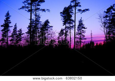 Purple Sunset In The Forest