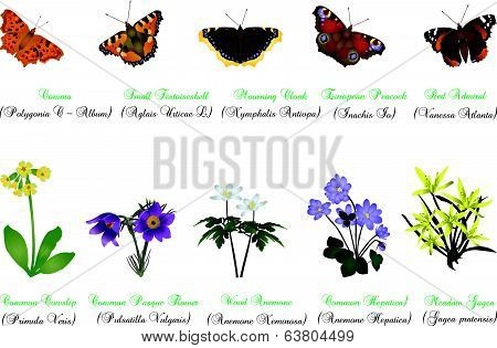 Nature set - butterflies and wild flowers