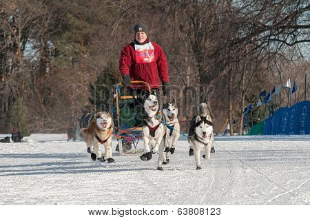 2014 Subaru Dogsled Loppet - Don Deckert