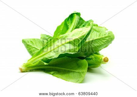 Cos Lettuce on White Background