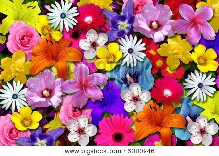 Colorfully floral scene