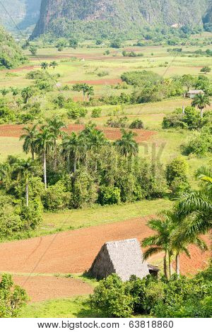 Agriculture at the Vinales Valley in Cuba, a place known worldwide for its beauty and the quality of its tobacco