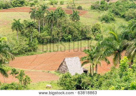 Aerial view with farming land of the Vinales Valley in Cuba, a place known worldwide for its beauty and the quality of its tobacco