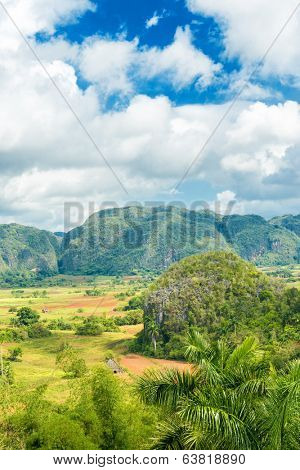 The Vinales Valley in Cuba, famous for its natural beauty and the quality of the tobacco grown in the area