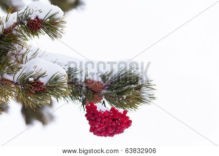 Red Mountain Ash Berries Christmas Tree Decoration