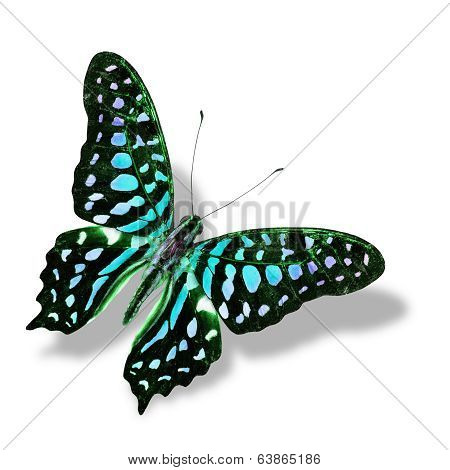 Colorful Blue Butterfly Flying Isolated On White Background With Soft Shadow