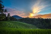 stock photo of rich soil  - A sunrise view of the terraced rice fields on the rich fertile volcano soil hills of Bali - JPG